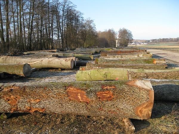 Holz Rohzustand 450
